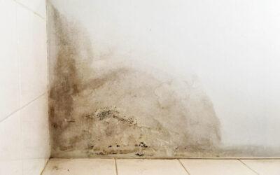 Addio alla muffa domestica: il cappotto esterno è la soluzione